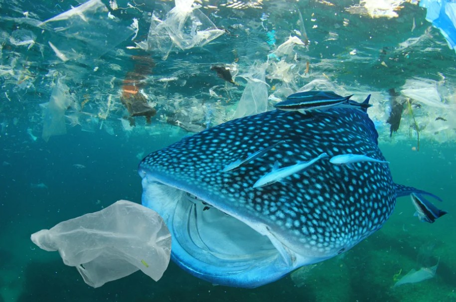 Пластиковый мусор: время бороться
