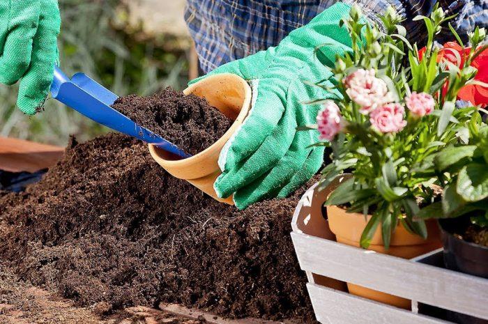 Секреты выращивания здоровых и красивых  комнатных цветов