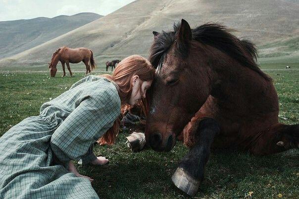 Лошади узнают фотографии своих хозяев
